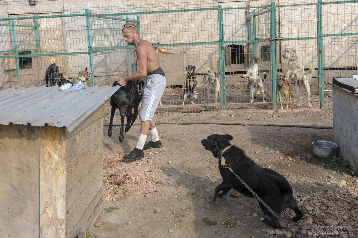 Работник приюта выхаживает не ходячего пса: моет, кормит, ставит капельницы