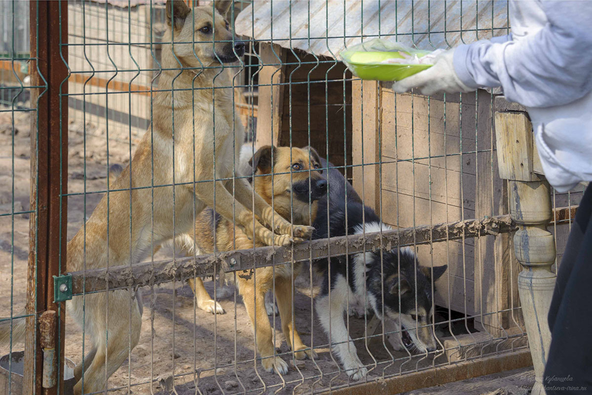 Вкусняшки и внимание - самое ценное для бездомных собак
