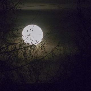 луна полная красивая