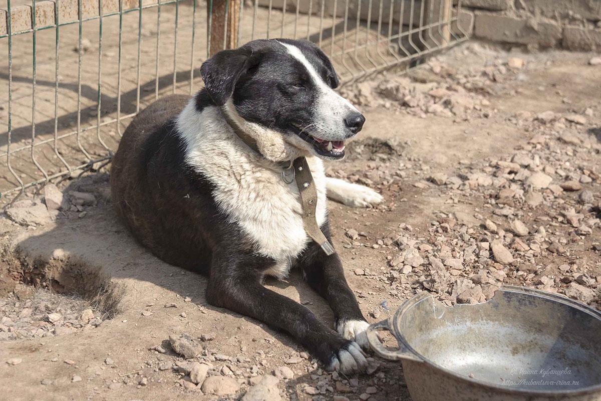 Во время новогодних салютов собаки теряются часто