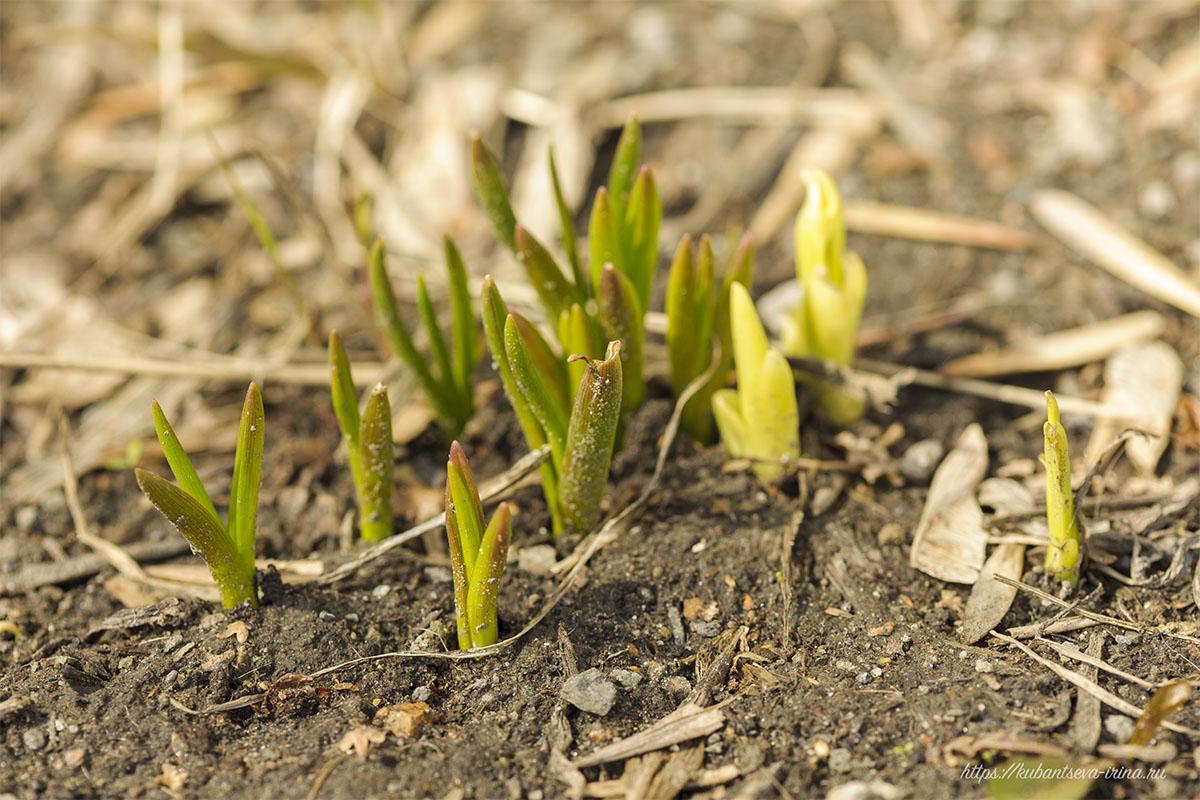 апрельские картинки