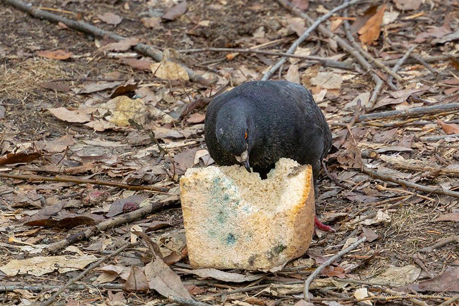 можно ли есть плесневелый хлеб