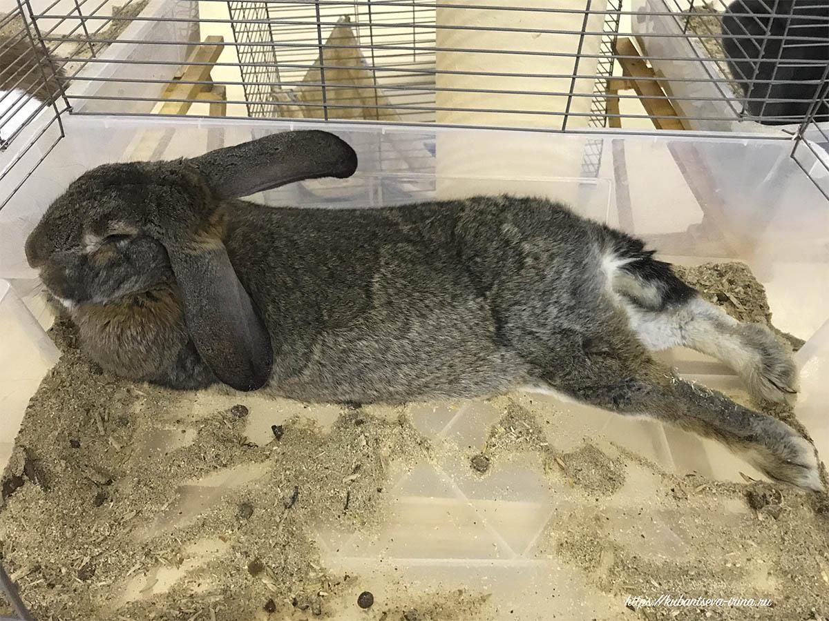 домашние кролики уход и содержание фото