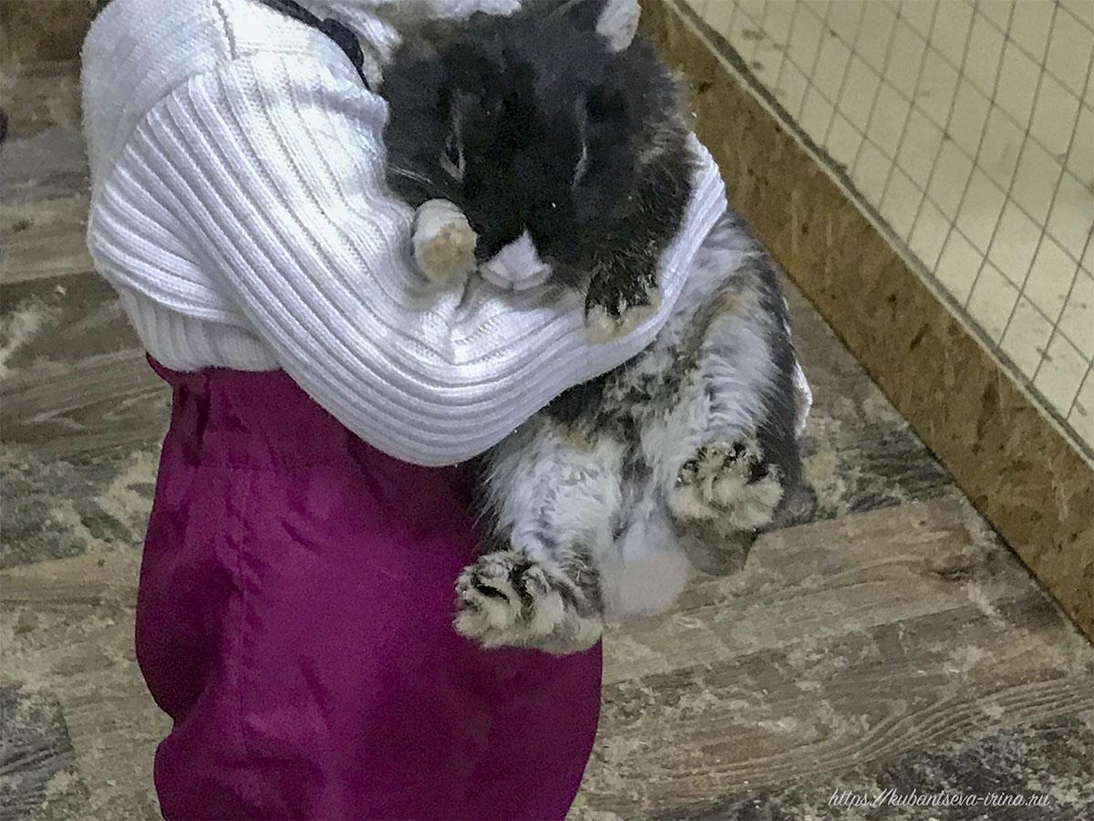 контактный зоопарк кролики