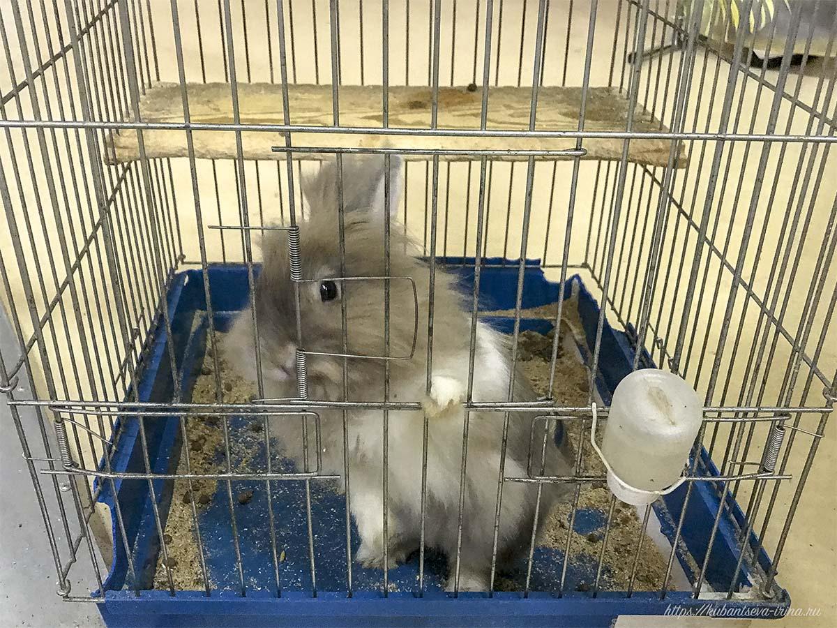 в клетке сидят кролики фото
