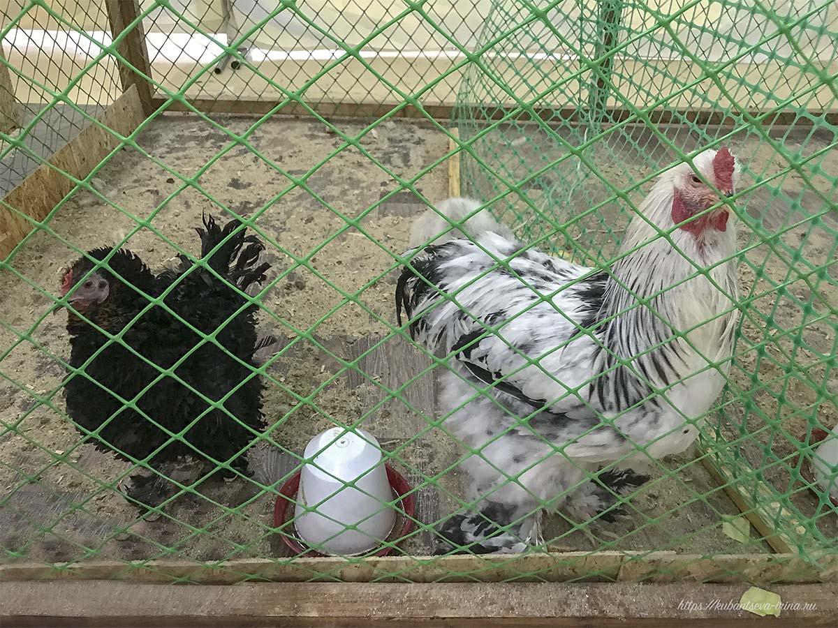 птицы в зоопарке фото