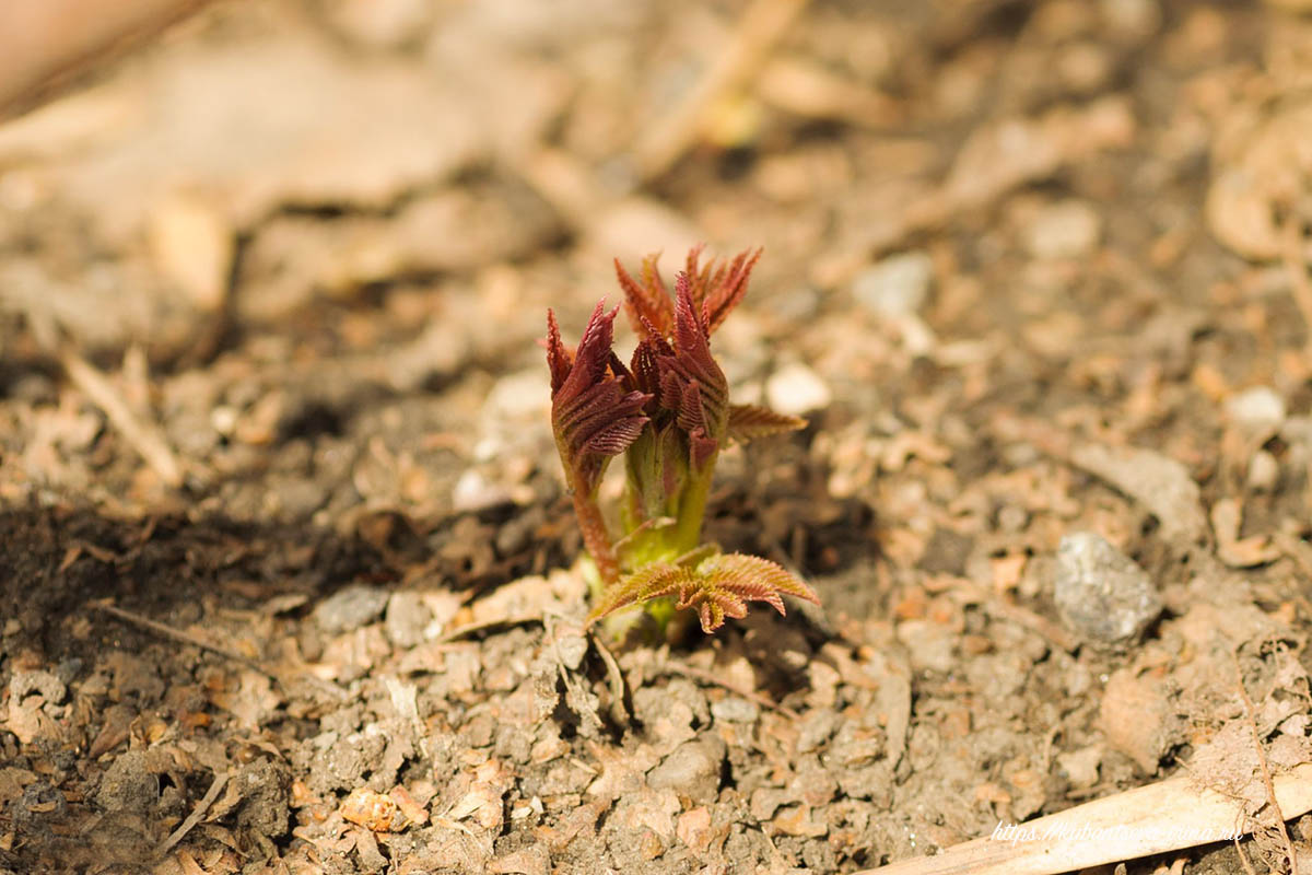 первые ростки