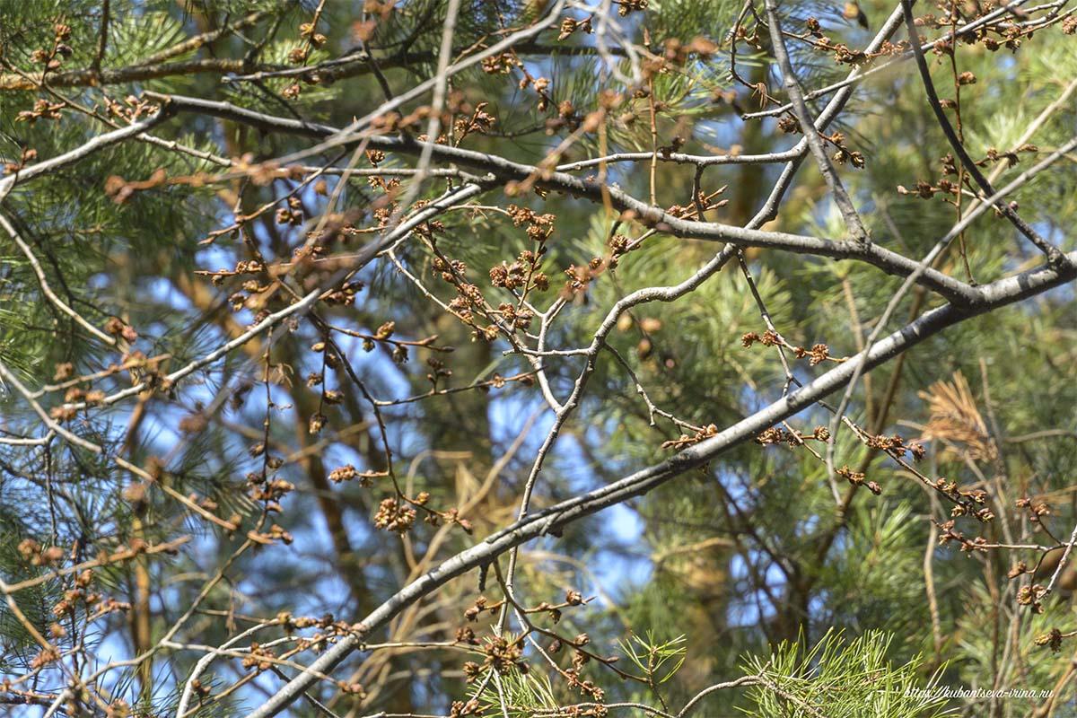 весна в лесу фото