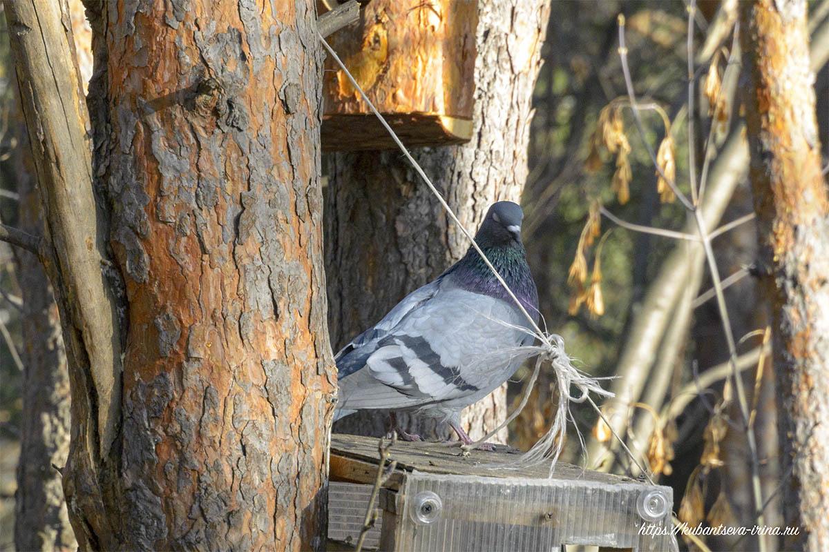 защита кормушки +от голубей