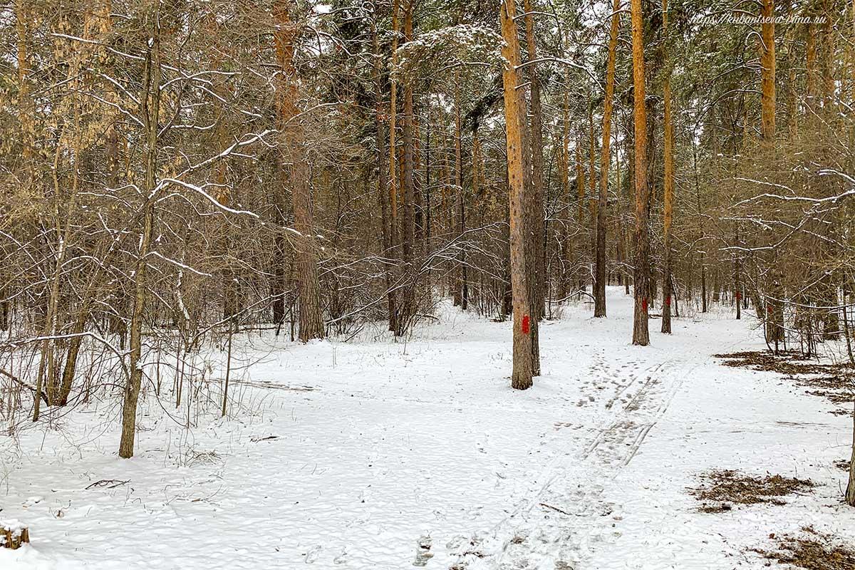снегопад весной погодный катаклизм
