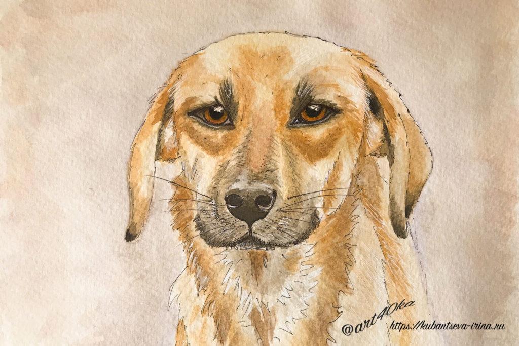 рыжее царство как нарисовать рыжую собаку