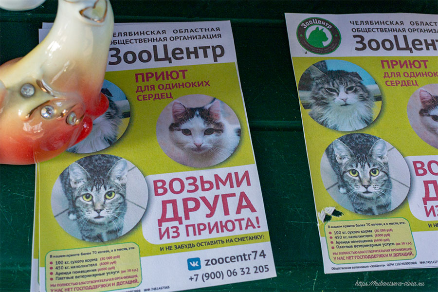 благотворительное мероприятие помощь животным