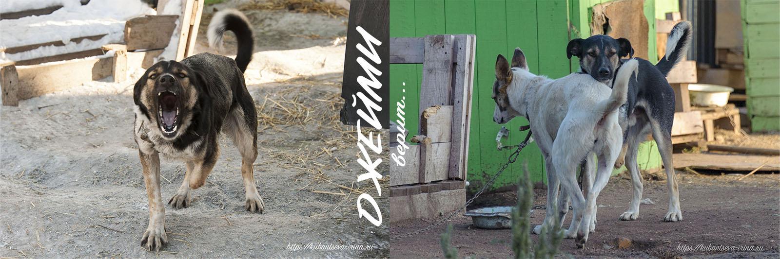 собаки с особенностями инвалид трехлапый
