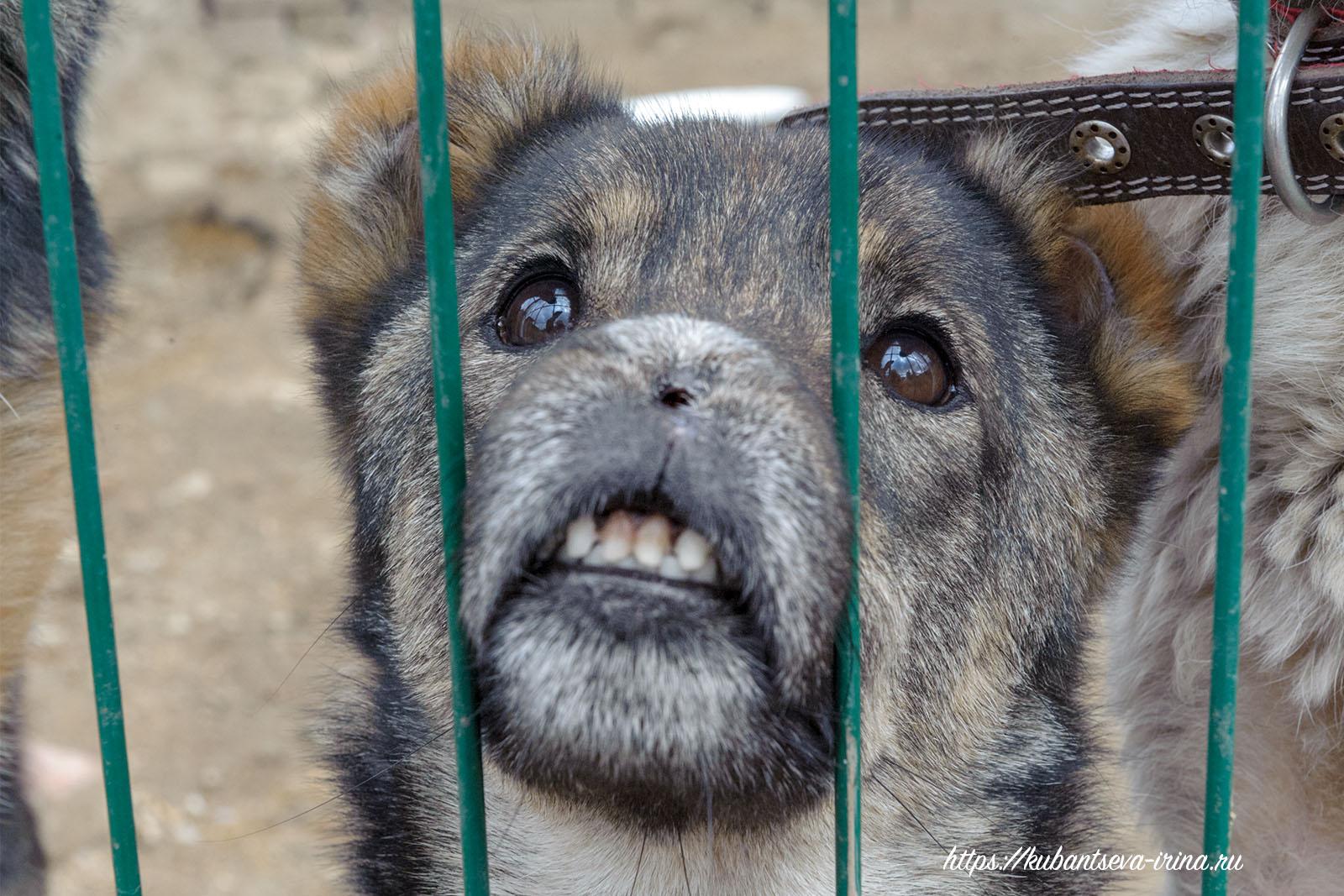 собаки с особенностями или инвалиды