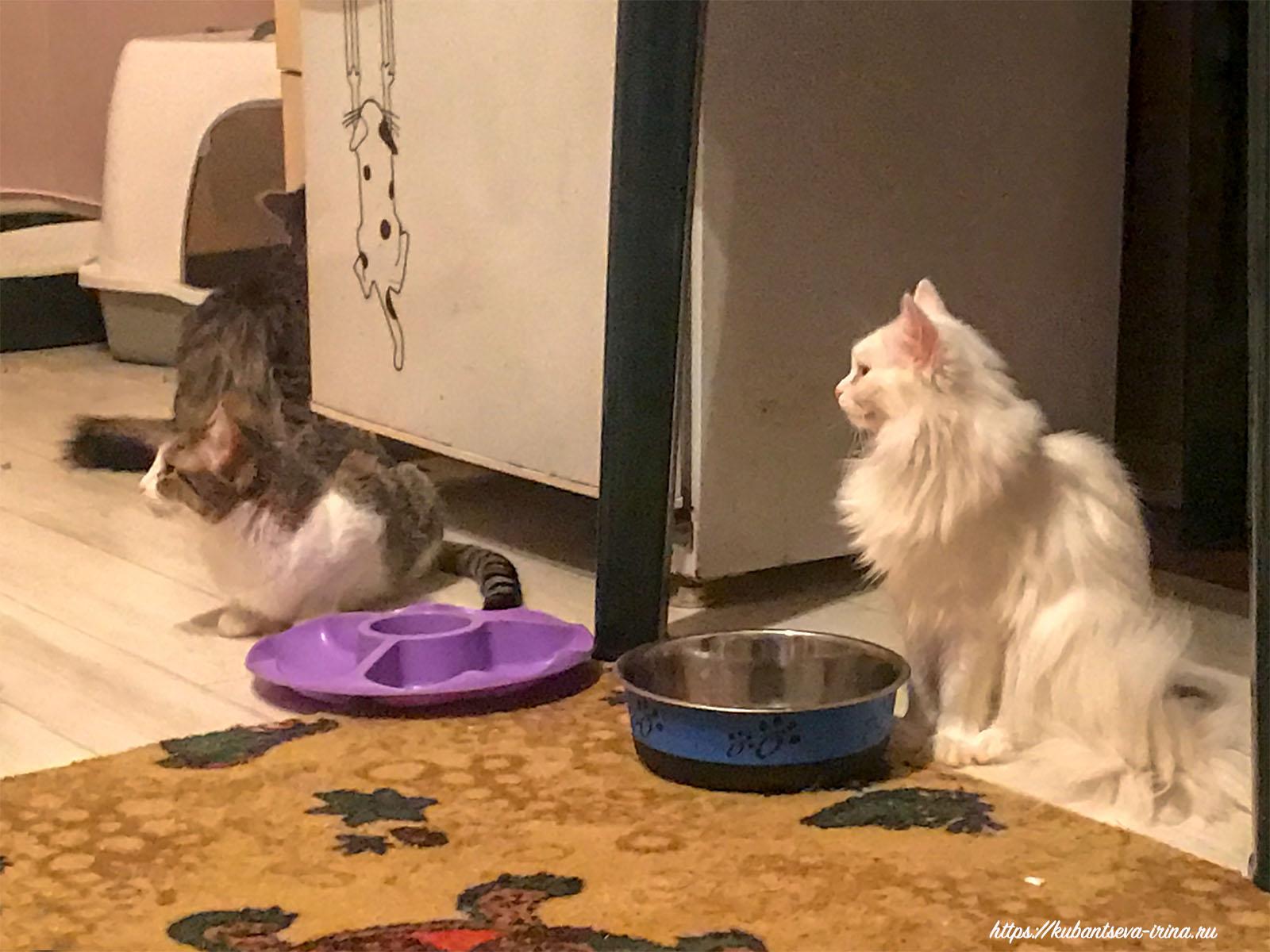 ЗооЦентр Челябинск кошки фото
