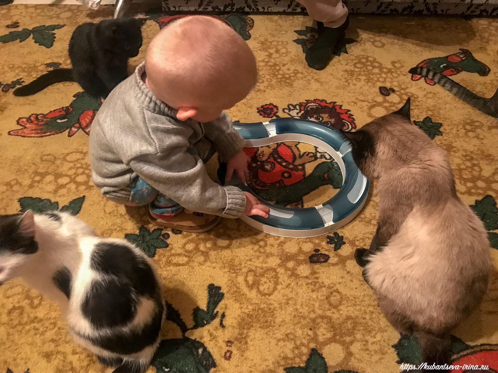 дети кошки дружба