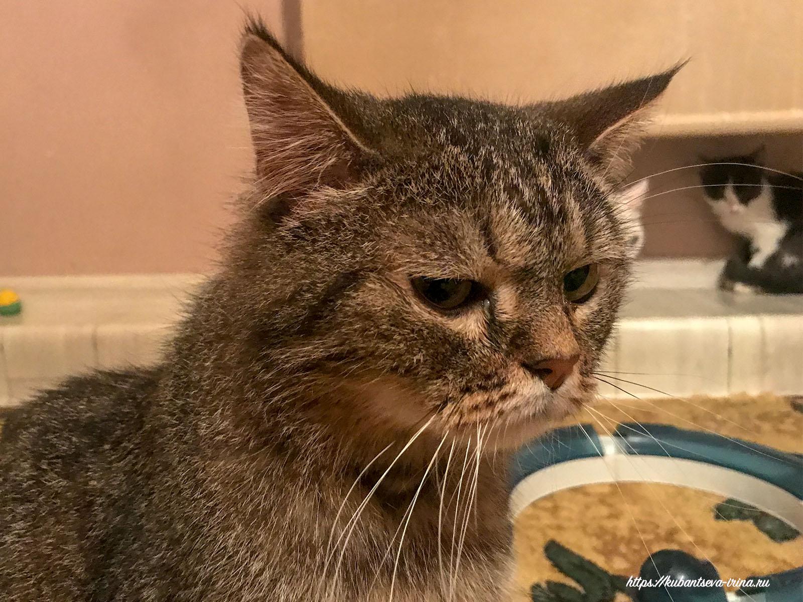 кот грустный фото