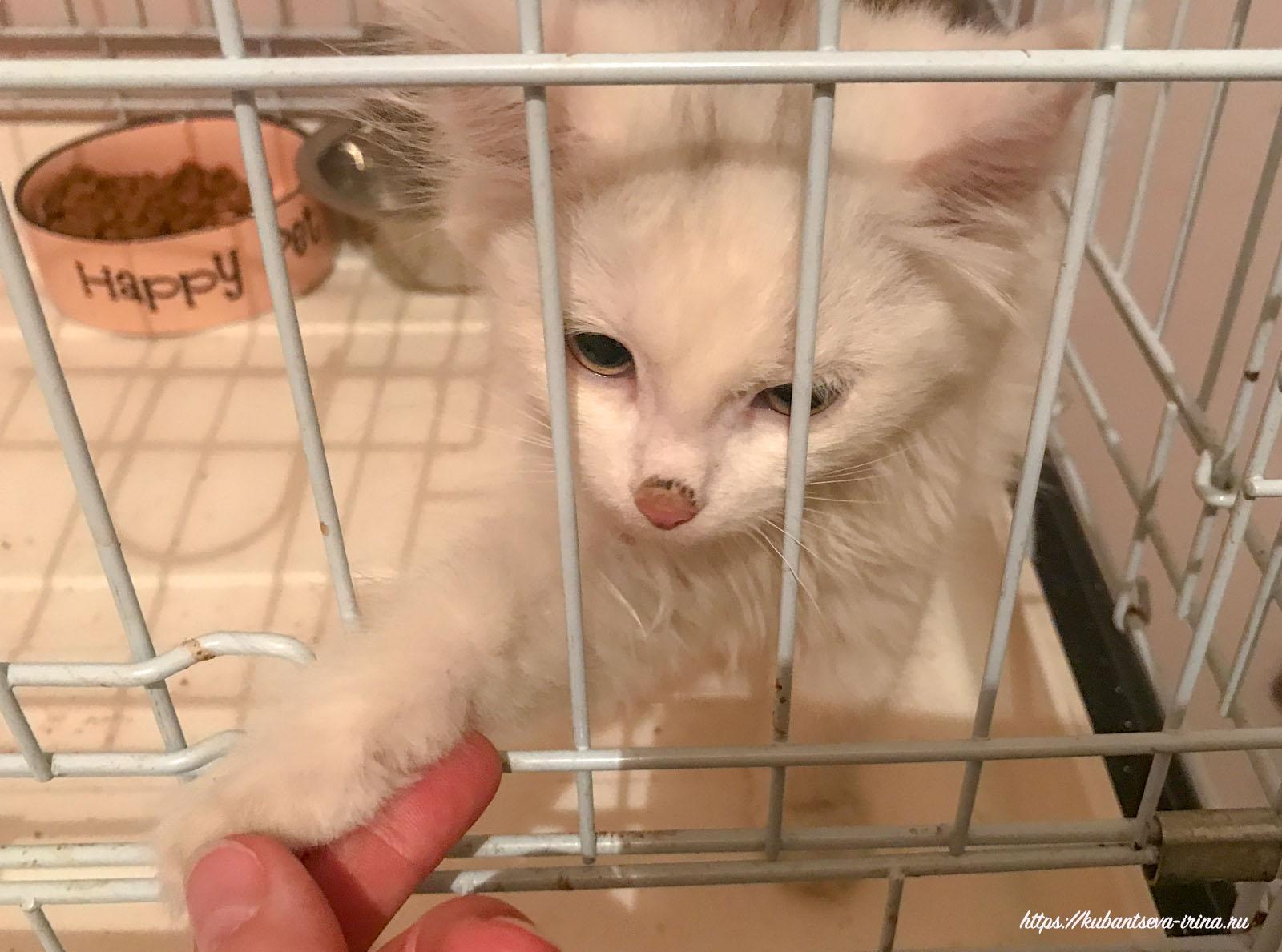 фото котят милых и пушистых