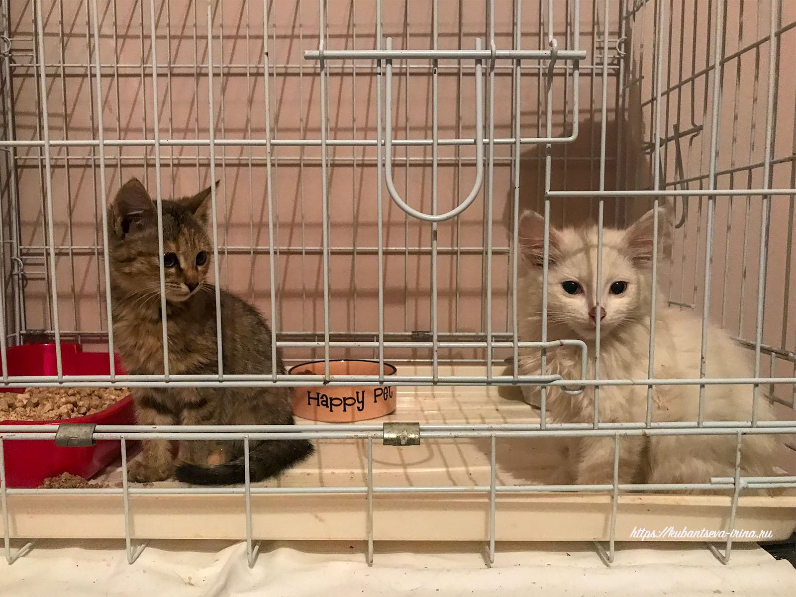 фотки милых котят