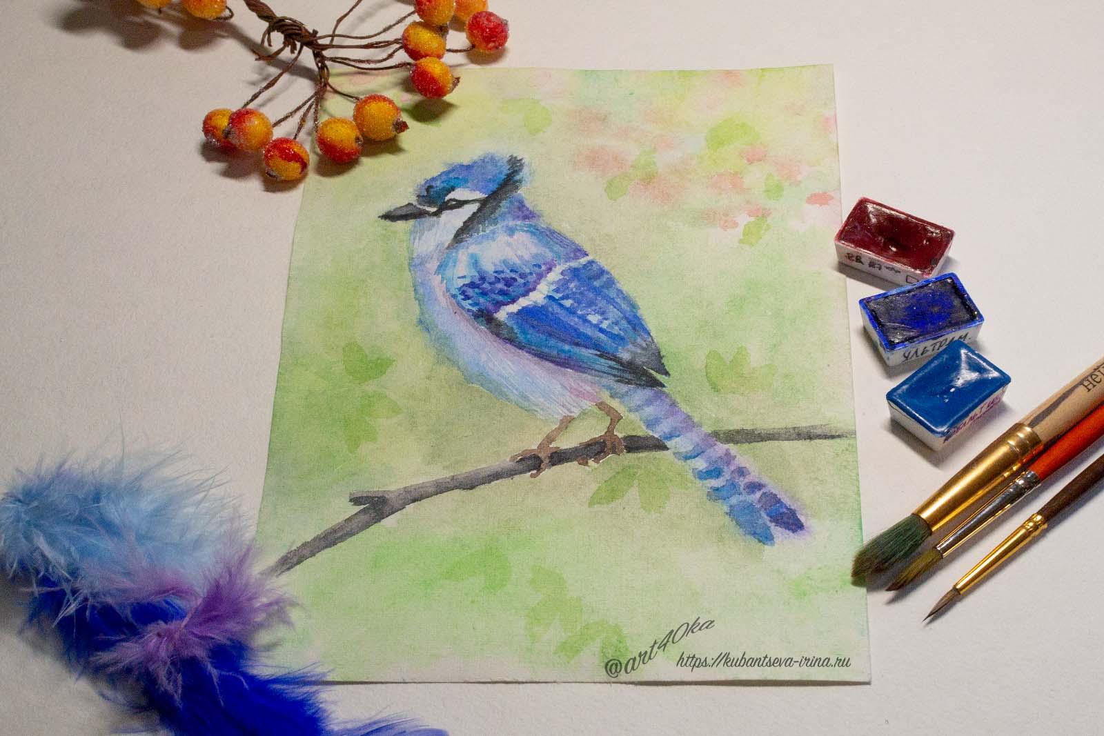 день птиц сойка голубая рисунок