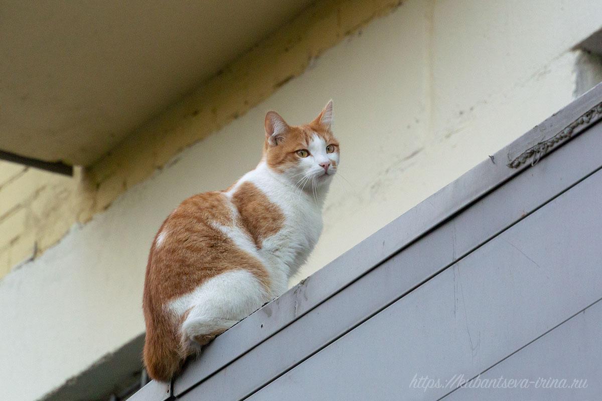 рыжий кот на балконе фото