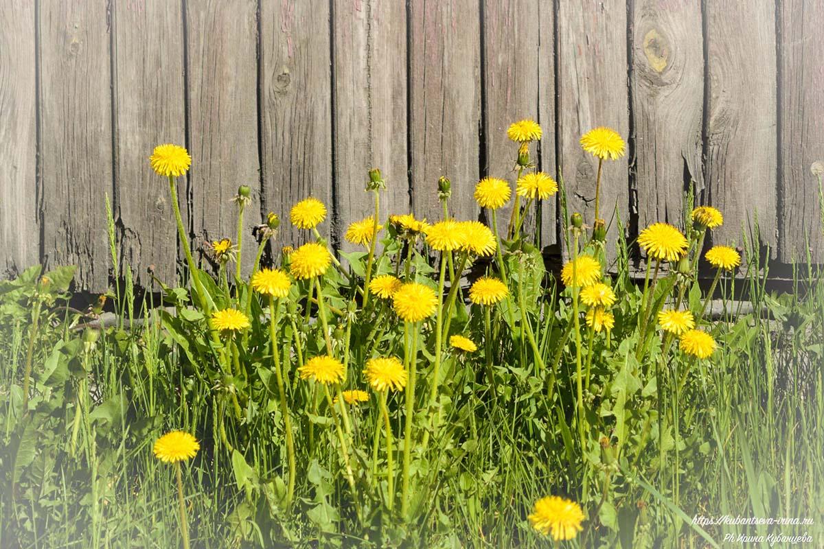 первые весенние цветы в городе фото