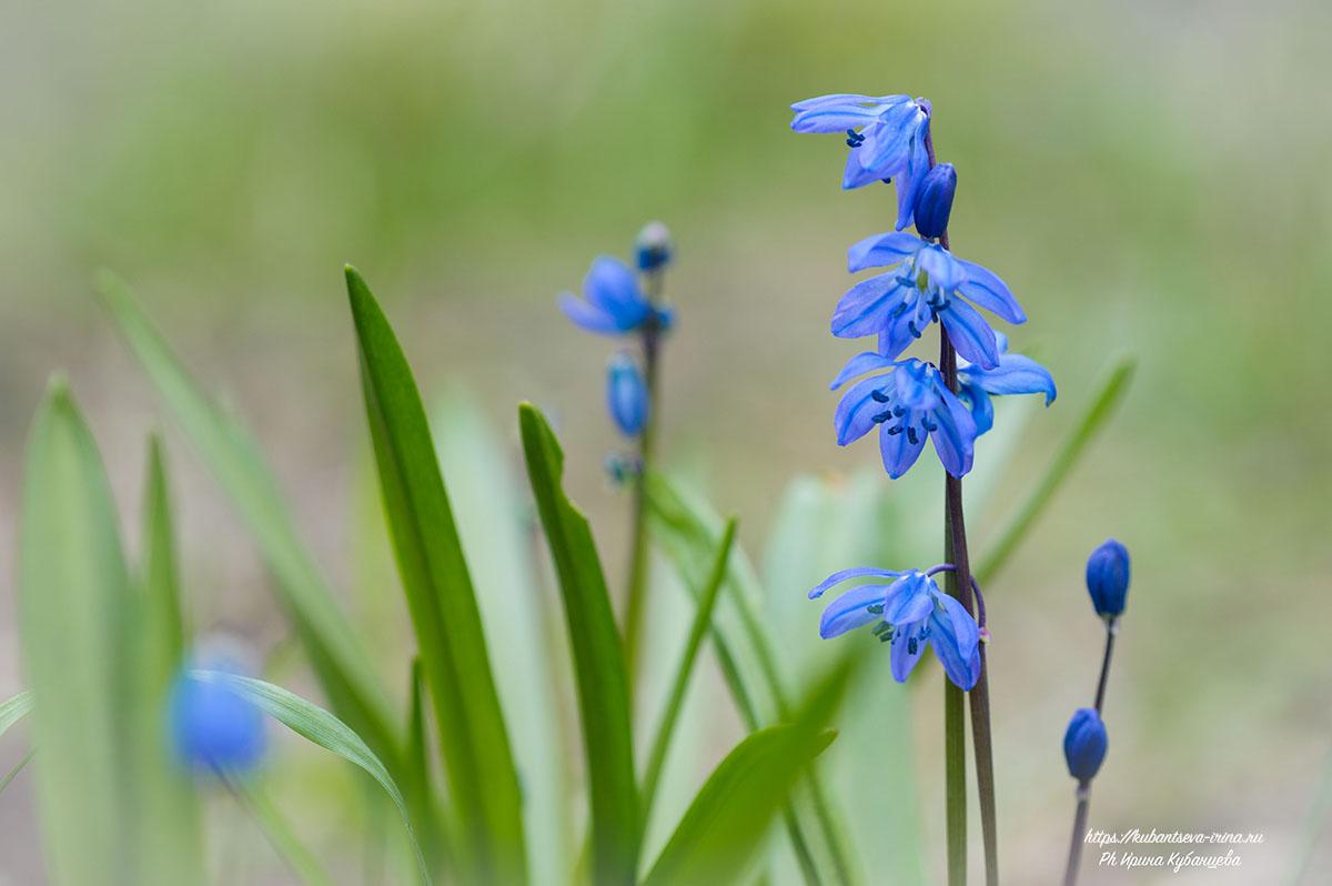 самые ранние весенние цветы фото