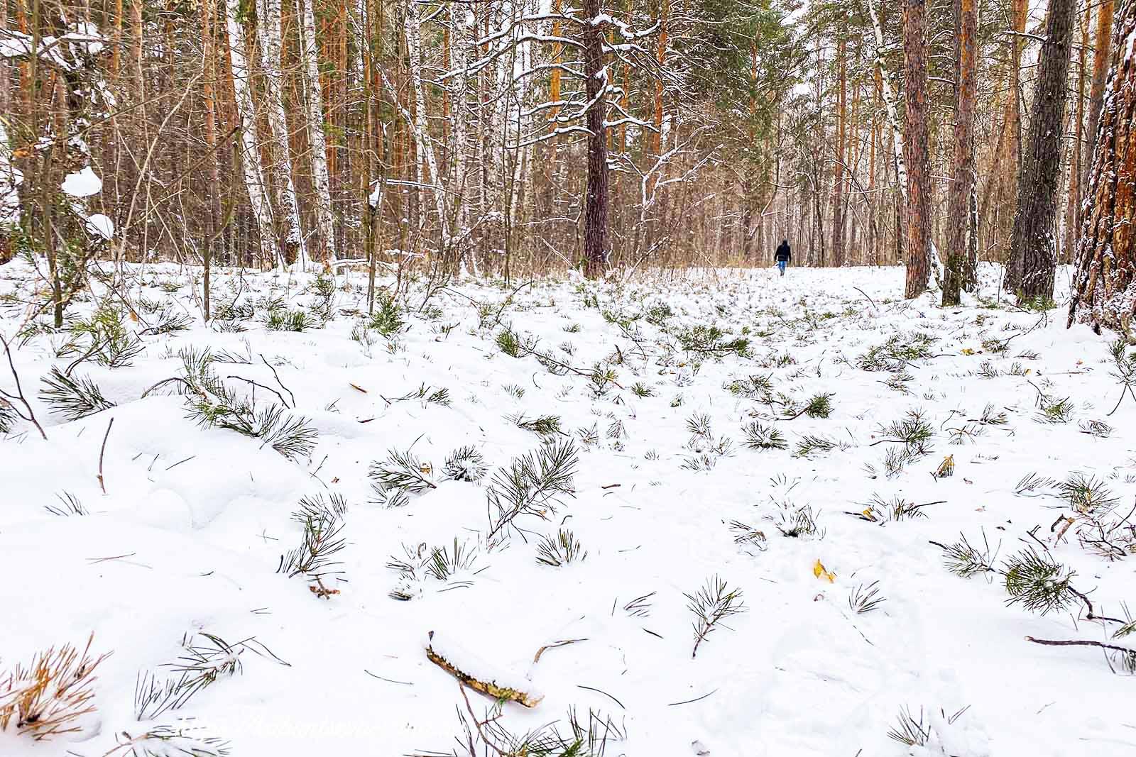 зима в лесу фото