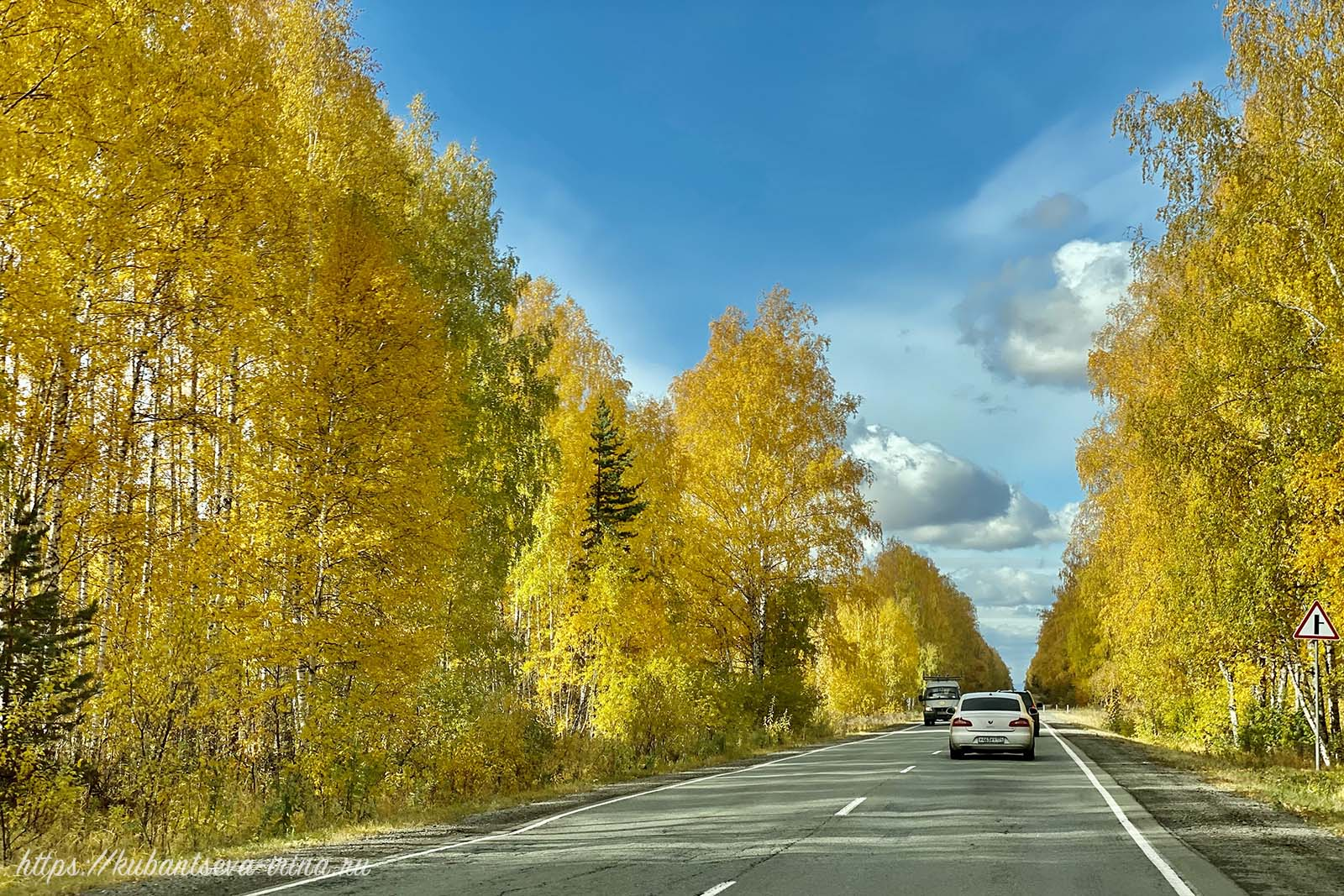 осенний лес дорога